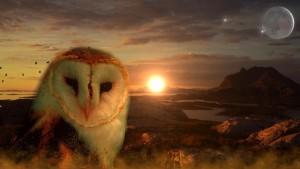 owl-711601_1920